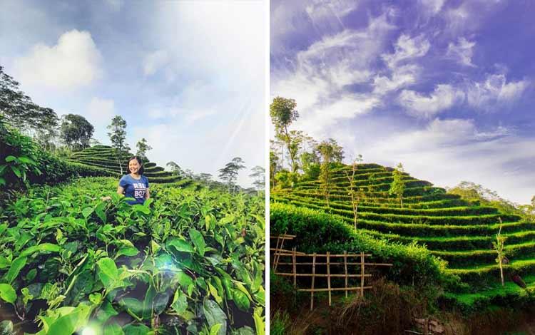 Tempat wisata Instagramable di Jogja - Kebun Teh Nglinggo