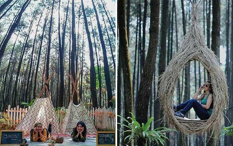 Tempat wisata di bogor yang instagramable - Gunung Pancar