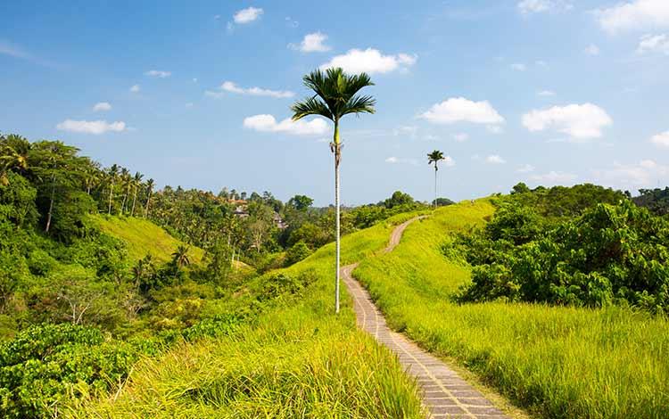 Tempat wisata favorit di Bali - Campuhan Ridge Walk