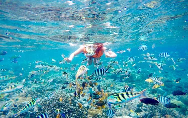 Aktifitas snorkeling di Nusa Penida