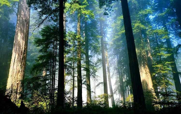 Info Terlengkap Bandung - Taman Hutan Raya Ir. H. Djuanda