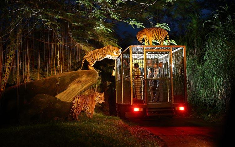 Info Terlengkap Singapura - Night Safari Singapore